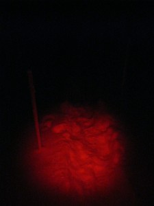 headlamp view of the transect