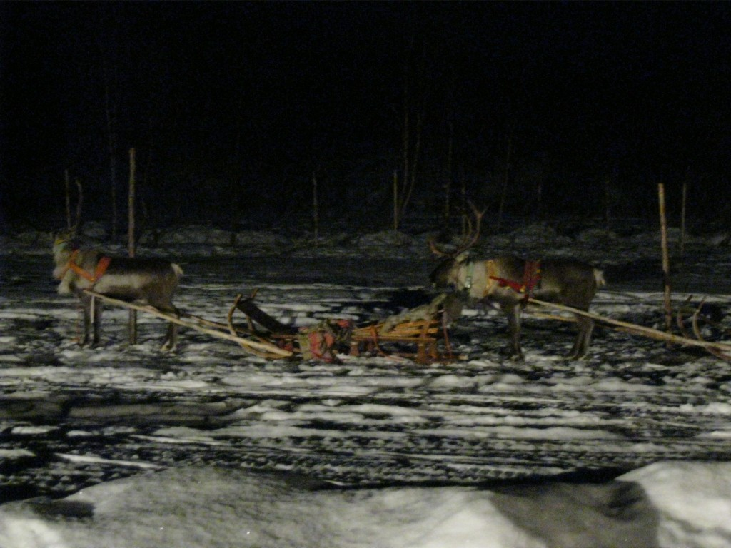 Our reindeer caravan, just waiting for us to hop on!